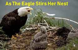 As The Eagle Stirs Her Nest